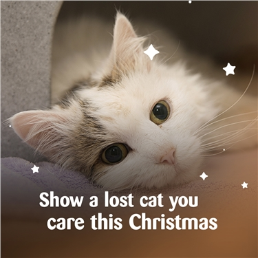 Make Christmas Magical for cats in Horsham this year