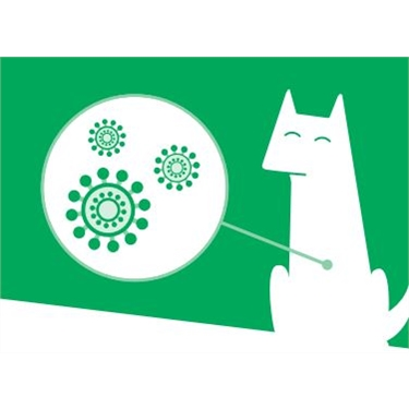 Cats and coronavirus - a Cats Protection update