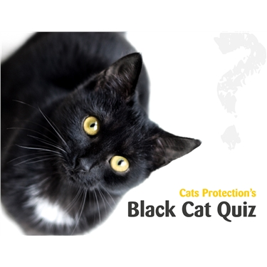 Black Cat Day Virtual Event
