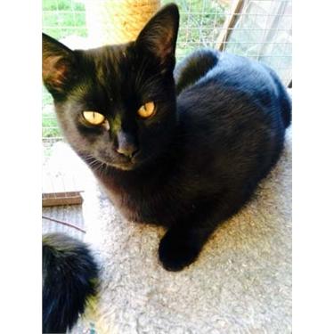 Black Cat Awareness Day: 27th October 2016