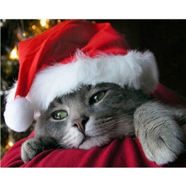 Christmas Catstravaganza