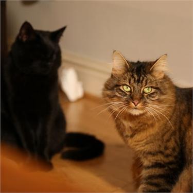 Planet Cat explores multi-cat households