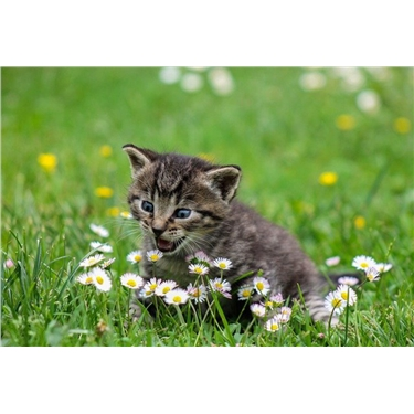 Fram and Sax News and Advice - Summer Safety for your cat