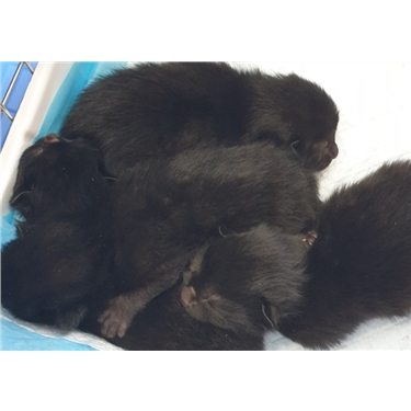 Kittens Found In Upturned Compost Bin