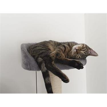 Davie -a very spoilt cat
