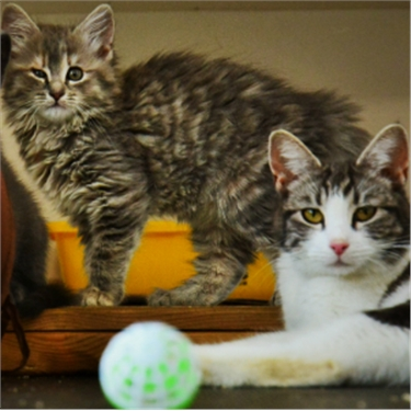 Love cats and kittens? A Rugby animal charity urgently needs your help