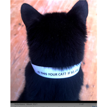 Paper Collars for Stray Cats