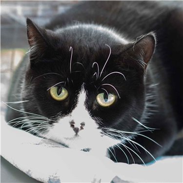 Homes needed for two overlooked cats