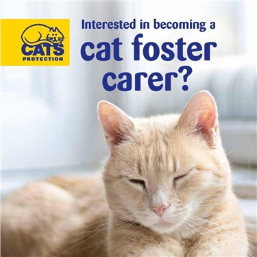 Cat fosterers wanted - please join our team