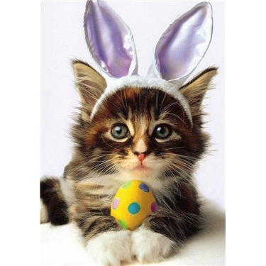 Tips for a Cat Safe Easter 🐱🐣🐰