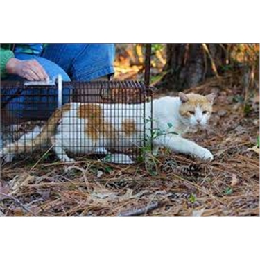 Volunteer(s) wanted to help with Trapping, Neutering and Releasing...