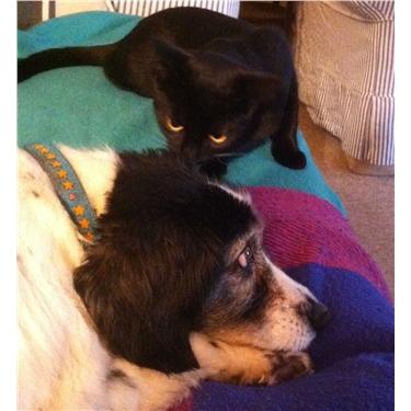 Gizmo Makes a Friend