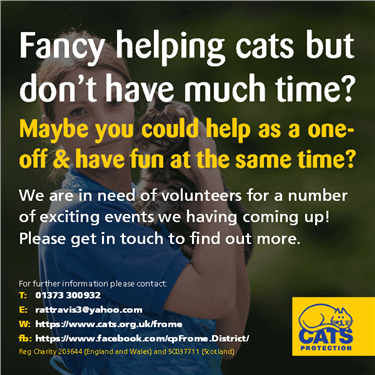 Fancy helping cats but don