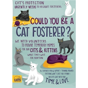 CAT FOSTERERS - WE NEED YOU!