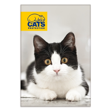 Cats Protection launches in Spelthorne