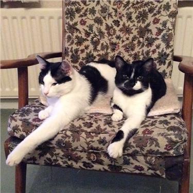 Feline Friendships