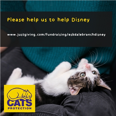 Can you us to help Disney?