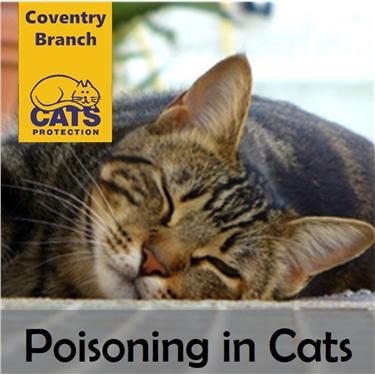 Cat Care: Poisonings