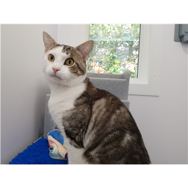 Pixie - Kitty of the Week!