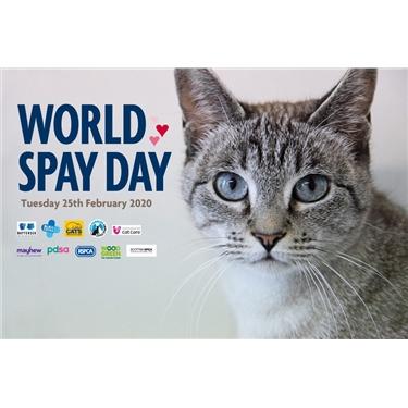 World Spay Day 25 Feb