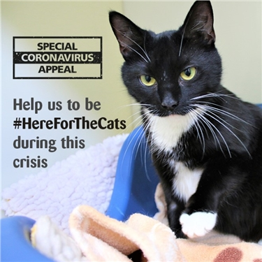 Please help us care for cats in our care