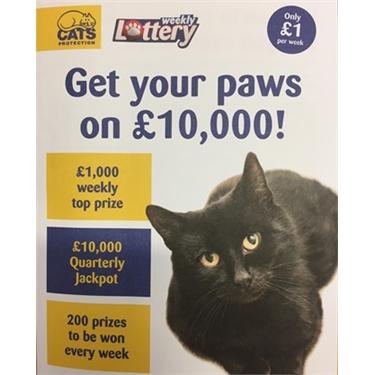 Feline Lucky?