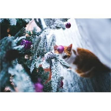 Fram & Sax News and Cat Care December 2018