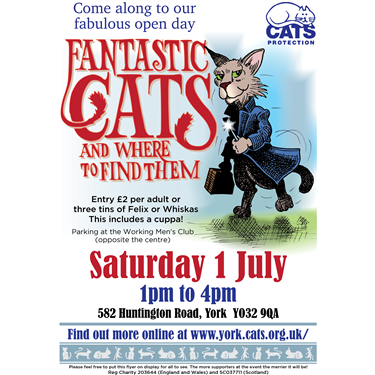 York Cats Protection Adoption Centre Open Day!