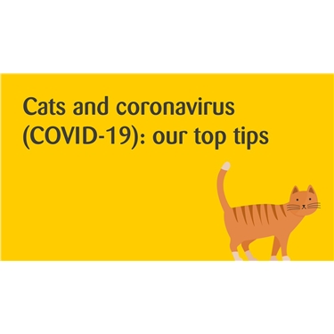 Cats and CoCatsronavirus (COVID-19) : Our Top Tips