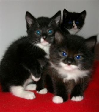 Kittens - the true cost!