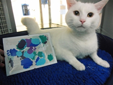 Purr-fect 'Paw-cassos': Cat art goes on sale