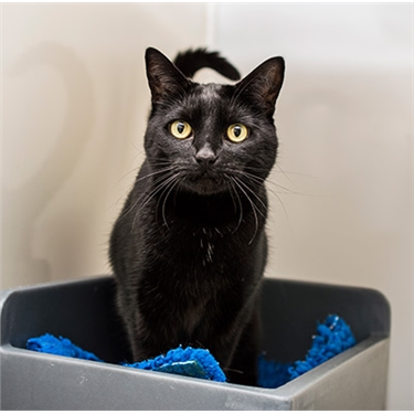 Could your cat be our National Black Cat Day champion?