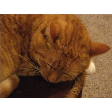 Cats going missing in Saxmundham