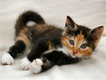 Black And Ginger Cat Names