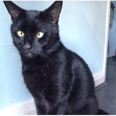 National Black Cat Day champion revealed