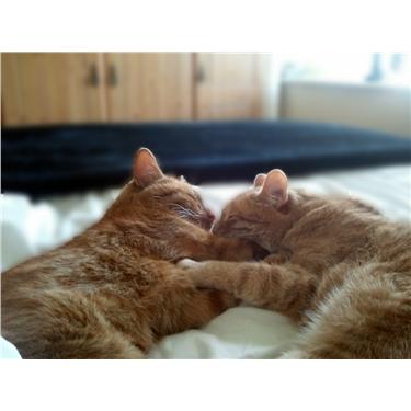 Cat Carers Needed
