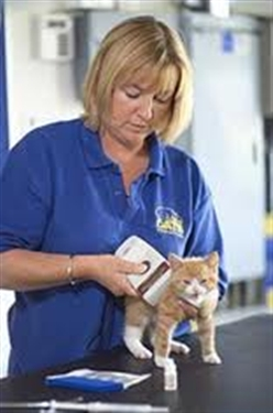 THE MARVELLOUS MAGIC OF THE MICROCHIP ... even The Miracle Microchip!