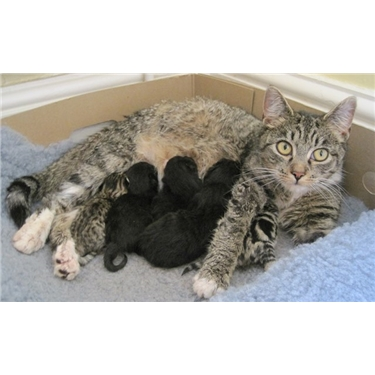 Fostering Pregnant Cats and Kittens