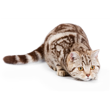 Why rehome your cat with Cats Protection?