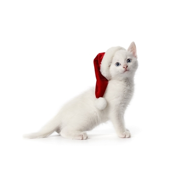 How to keep your feline in purr-fect shape this Christmas