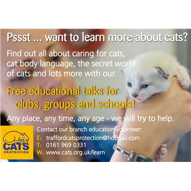 Want to Learn More About Cats?