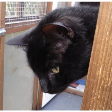 Black cat appeal