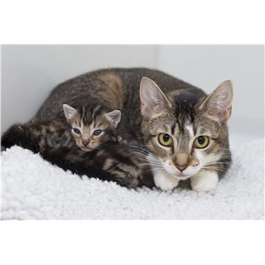 Neutering- Family Planning for Felines