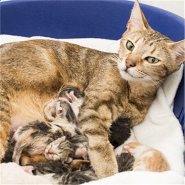 Bumper litter of 11 KITTENS gives stray puss Donatella a Christmas surprise