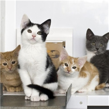 Where there's a will…there's a cat charity
