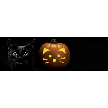 National Black Cat Day 2018