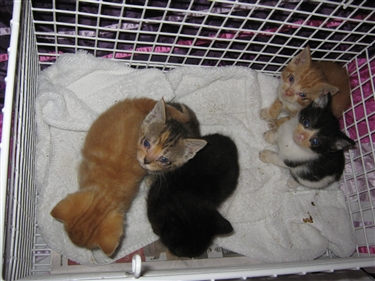 Cat Flu Kittens Blog