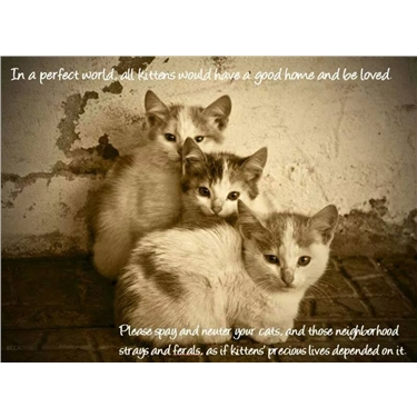 NEUTER & SPAY IS THE KINDEST WAY