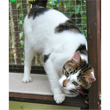 Cat charity slams kitty couture