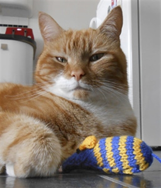 'Feline' like knitting for a good cause